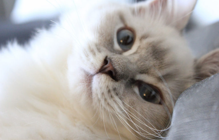 SE*Alicendy's Katter